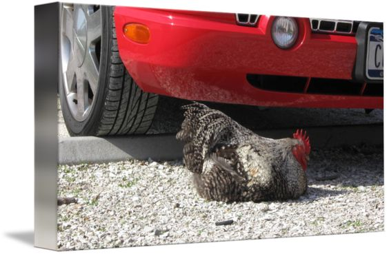 """""""Chicken and Car"""" by April O"""