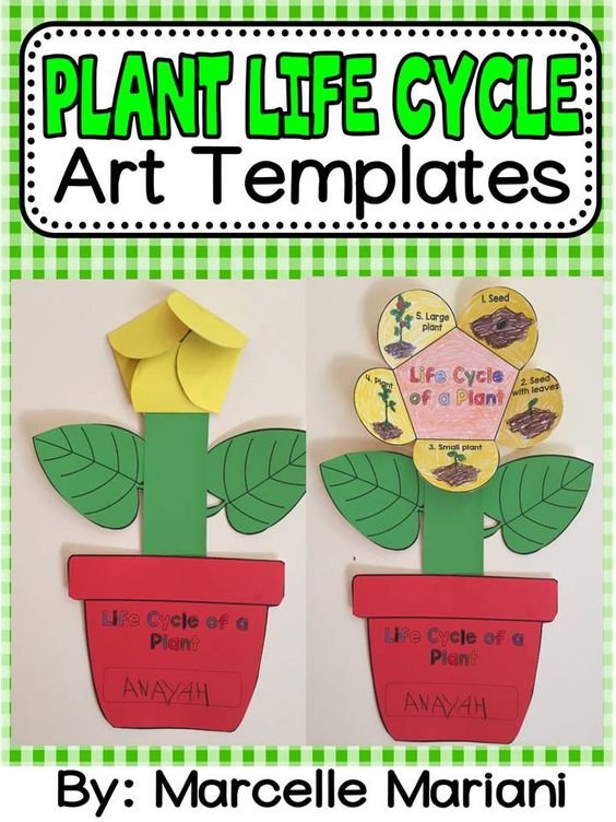 Plant life cycle art activity template life cycles for Preschool flower crafts templates