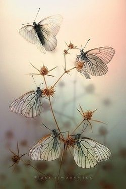 coisasdetere:  Macrofotografia de Igor Siwanowicz