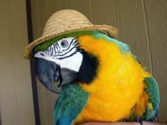 http://www.mypetarticles.com/pet-topics/pet-birds/ - PET BIRDS