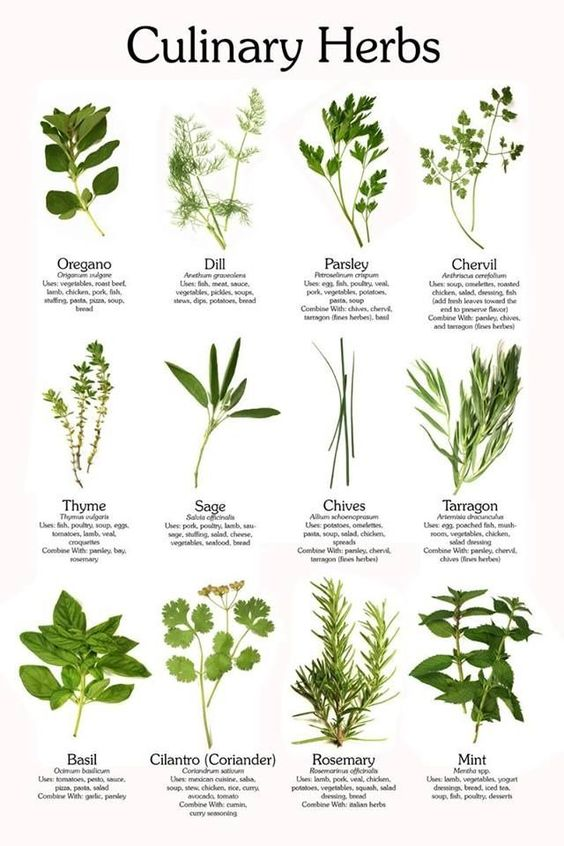Culinary Herbs Garden Guide | culinary herbs!