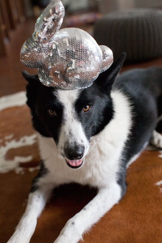 can i balance a sequin bunny on my head?  of course i can.  don't be an idiot.