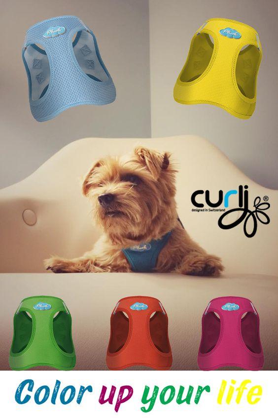 Die neuen knalligen Farben 2016 von Curli