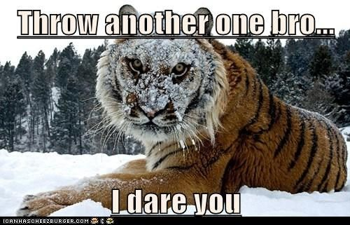 funny pictures of animals with captions - Google Search: