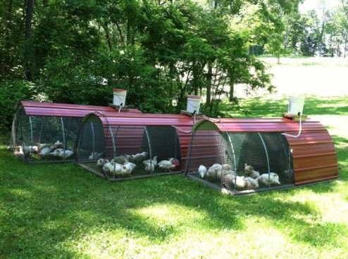 chicken tractors---we could probably make these...we have leftover metal roofing from both our house and outbuilding: