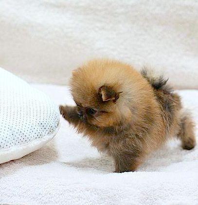 TOOOOO precious!!