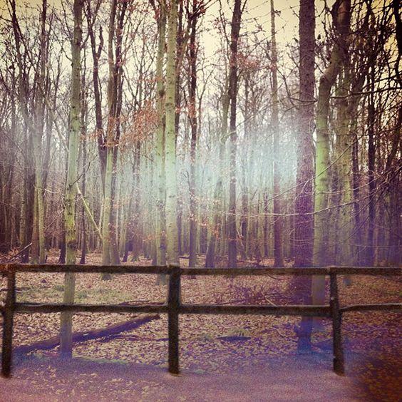 Nostalgic Woods