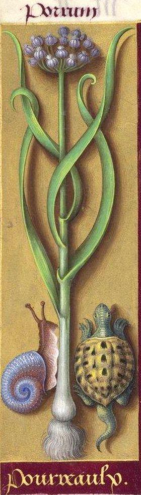 Jean Bourdichon - from Les Grandes Heures d'Anne de Bretagne - c.1503-1508: