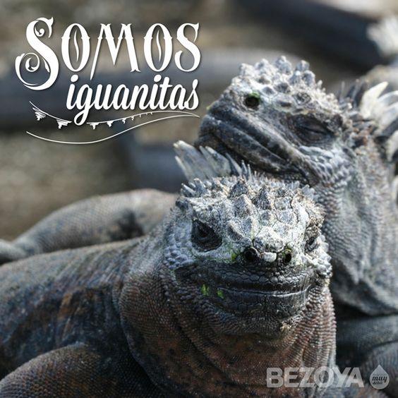 Somos iguanitas. #bezoya, iguanas, mascotas, animales