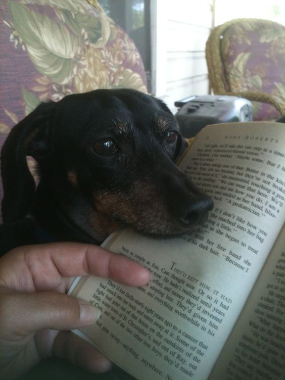My dog, Abby, thinks I should pay attention to her instead of read my book.