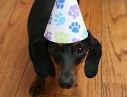 Resultado de imagen para dachshund birthday