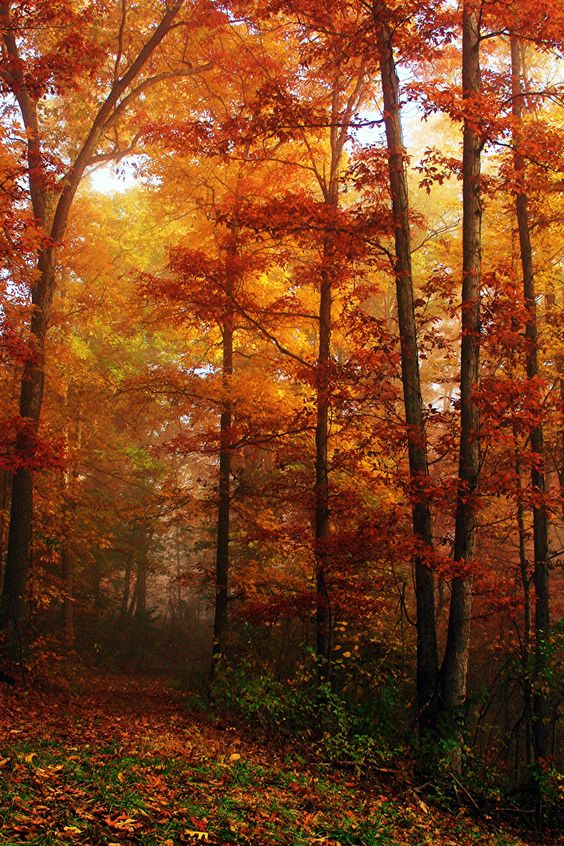 Red Leaves And Rain — opticcultvre: Foggy Path With Fall Foliage...