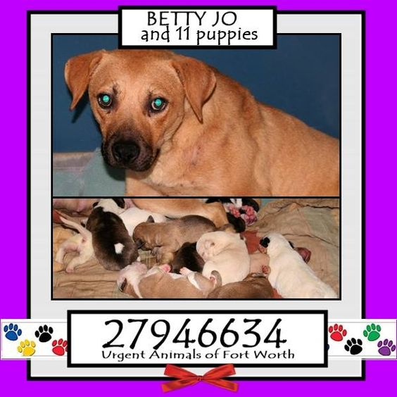 VERY URGENT - BETTY JO AND HER 9 PUPPIES, PLUS 2 ORPHANED PUPPIES SHE TOOK UNDER HER WING