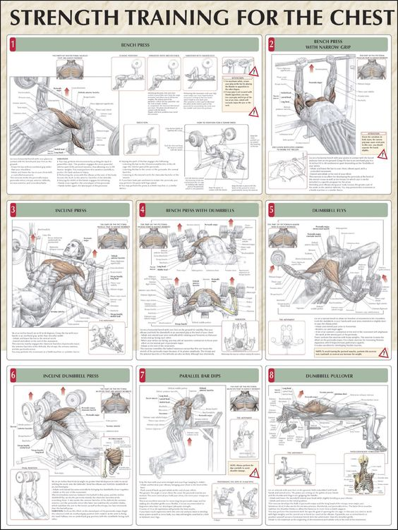 Strength Training for chest                                                                                                                                                     More