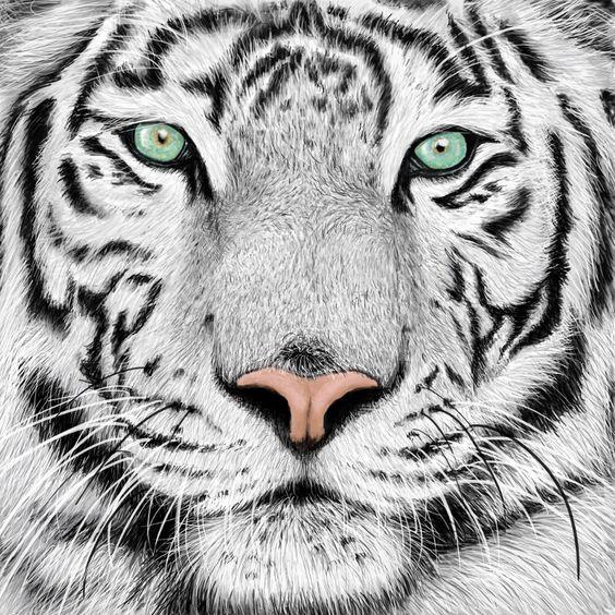 white tiger via craftsy malen pinterest projekte. Black Bedroom Furniture Sets. Home Design Ideas