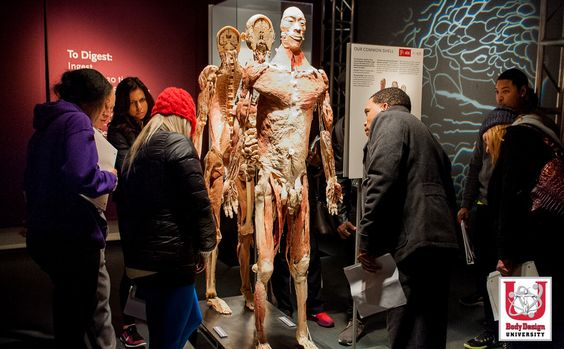 200+ human bodies and specimens, meticulously dissected and respectfully displayed, offer an unprecedented and wholly unique look into your amazing body. Our live course allows students to visit Bodies...The Exhibition during each session! bodydesignuniversity.com