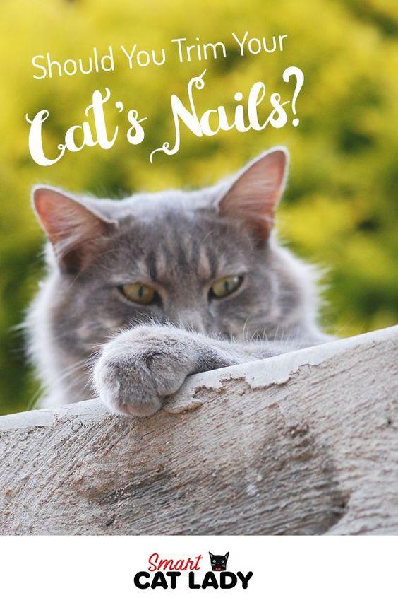 Should You Trim Your Cat S Nails Cats Cat Behavior Cat Grooming