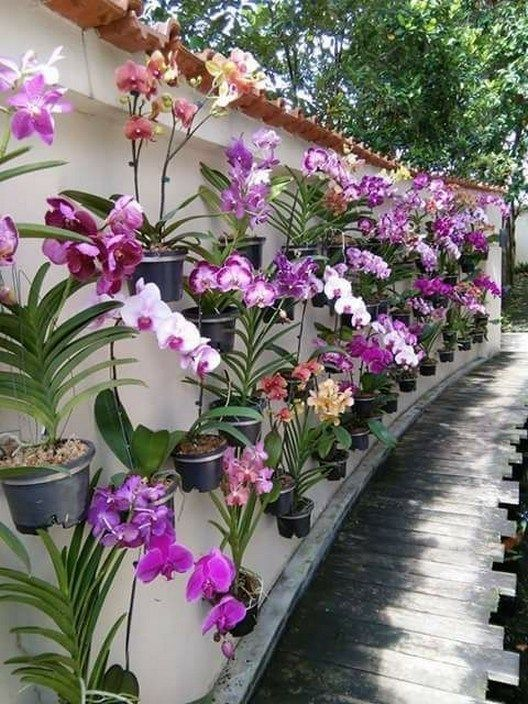 58 Small Backyard Landscaping Ideas On A Budget 39 Solnet Sy Com Backyard Plants Plants Small Backyard Landscaping