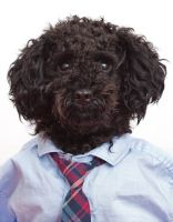 Dogs don office wear for dress-down Furs-day   Metro News