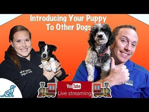 Puppy Training Basics Multiple Dog Homes Professional Dog