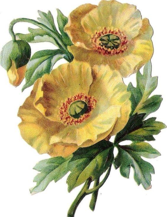 Oblaten Glanzbild scrap die cut chromo Blume flower fleur blossom Blüte: