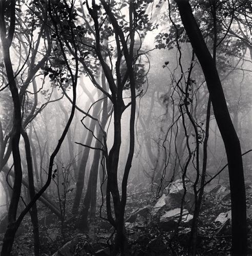 Mist Shrouded Forest, Gageo-do, Shinan, South Korea, 2012  Michael Kenna,