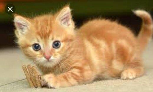 Pin By Urusa Khan On Animal S Cute Cat Wallpaper Cat Wallpaper Kittens Cutest