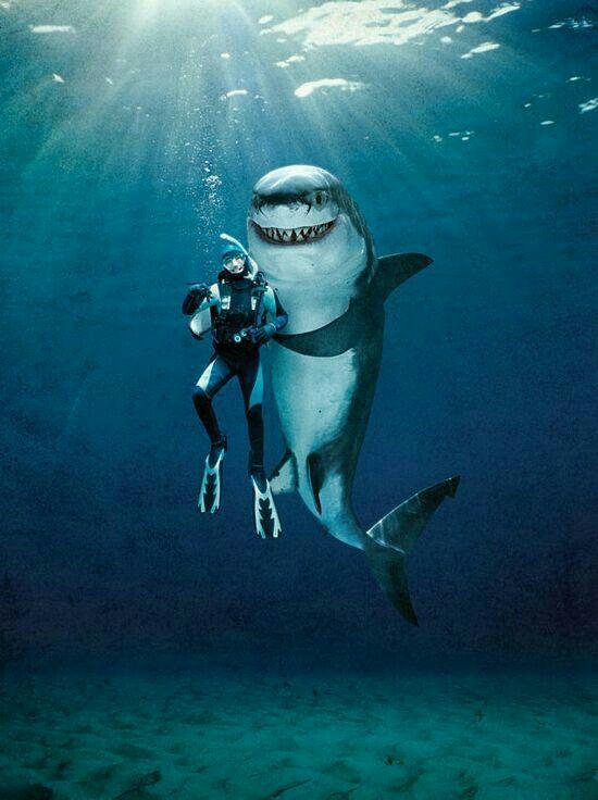 Friends Grand Requin Blanc Requin Dessin Requins Blancs