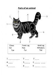 english worksheet animal body parts tot preschool cat theme pinterest english body. Black Bedroom Furniture Sets. Home Design Ideas
