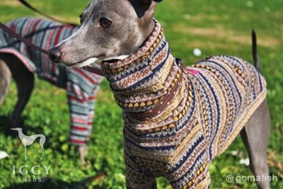 Jacquard knit / yellow in IGGYplus italian greyhound clothes