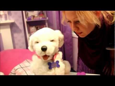 Youtube Hunde Golden Retriever Echt Jetzt