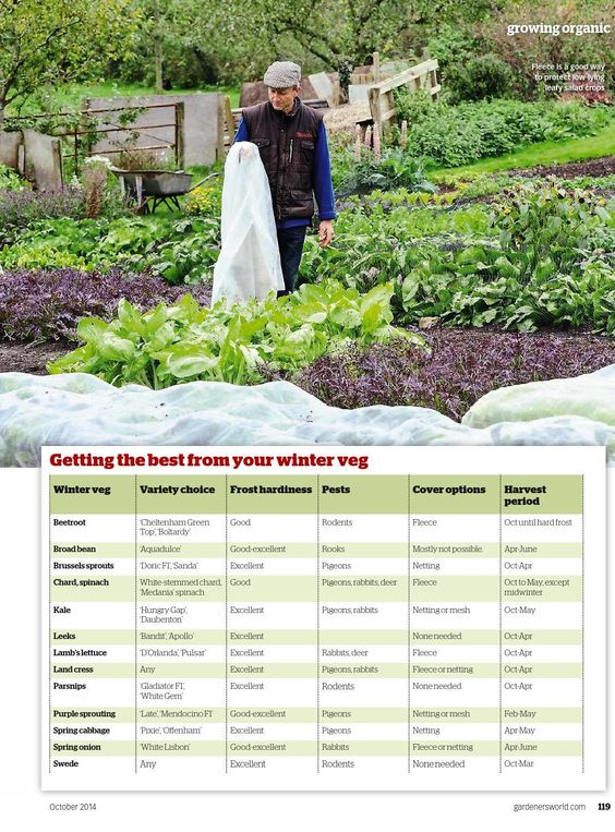 #ClippedOnIssuu from Gardenersworld201410