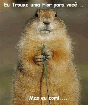 Eu te trouxe uma flor... mais eu comi!