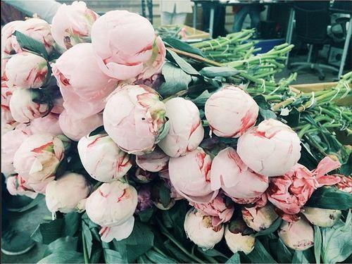 piles of pale pink peonies.