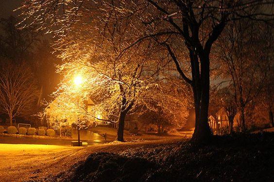 Neighborhood street in Cumming Georgia with ice buildup on the trees