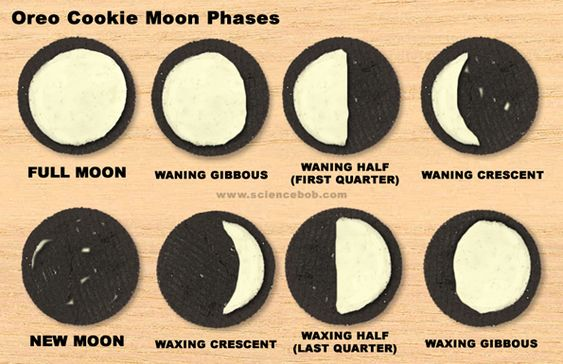 Moon Phases...awesome science activity