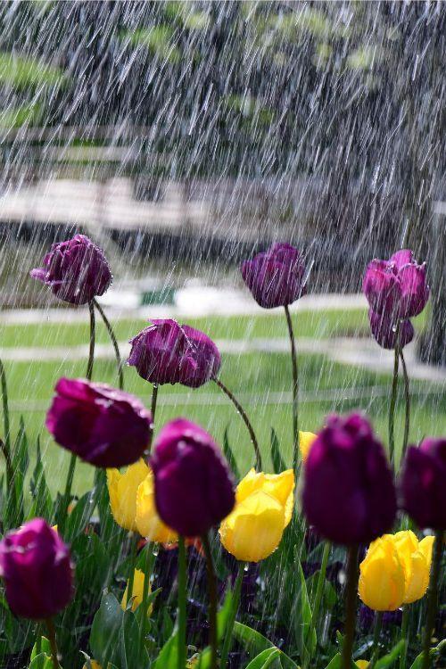 orchidaorchid:  Rain of love by: Kenan Kaya