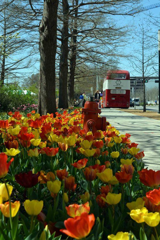 La primavera está llegando a #Oklahoma #USA y nada mejor que vivirla en tiempo real #tulipanes #tulip #spring #RealTripenOKC #SEEOKC #vueltaAlMundo #viajerosReales