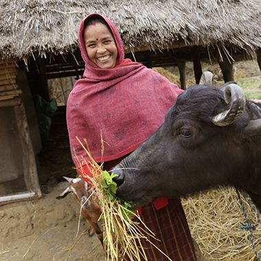 Give A Water Buffalo in Someone's Name! The buffalo will provide milk to a family in need and make farming easier by tilling fields and providing fertilizer.