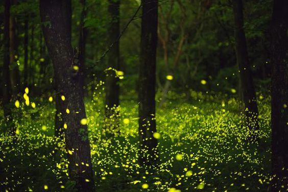 Bosques inundados de luciérnagas en Tlaxcala