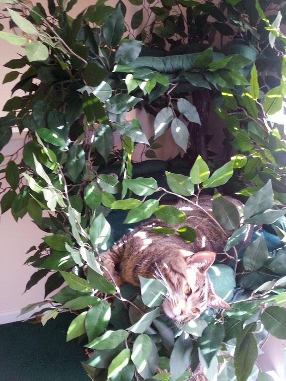 Tigger Bear loves his Fantasy Tree! #UltimateCatTree: