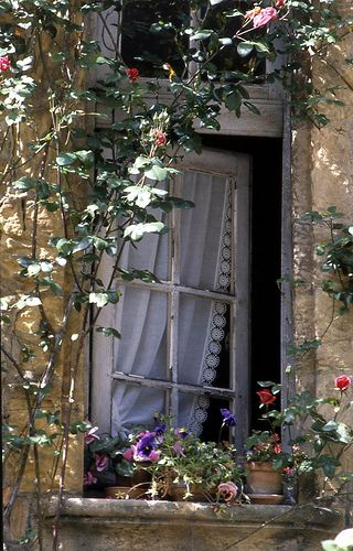 window with lace trimmed curtains + climbing roses, exterior view | architectural details: