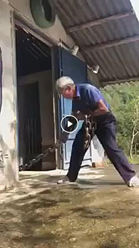 Este cachorrinho e muito forte