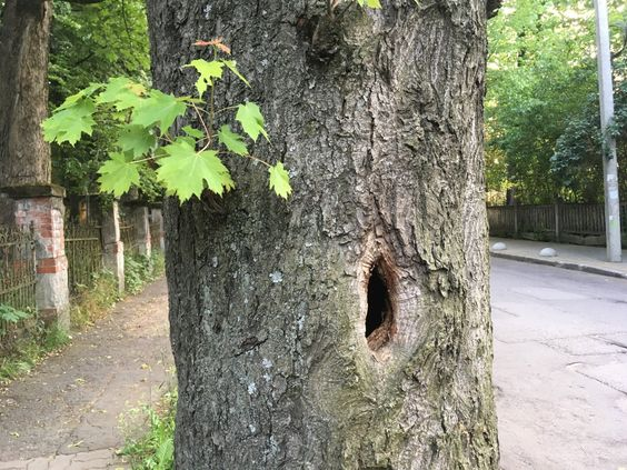 Дерево на дорожке