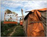 Gaiola com pássaro de estimação fazem parte do cotidiano no acampamento calón. Foto: Márcio Lima