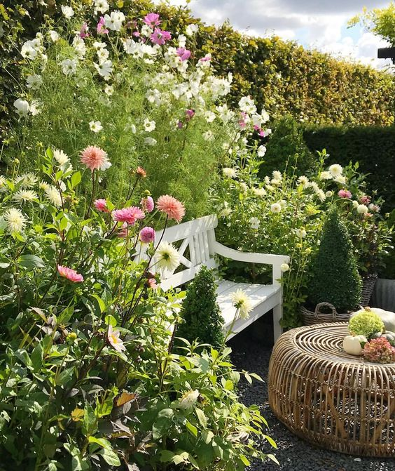 My Garden Bench Is Covered By Dahlias And Cosmos Dahlia Cosmos Garden Bench Dahlias Garden Amazing Gardens