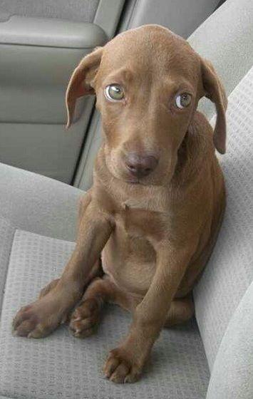 Best Eyes Finalist - Priscilla's dog Cocoah from Miami Beach, Florida.