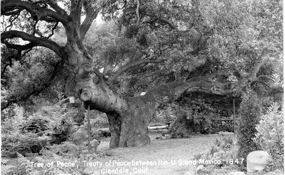 "Front of a postcard of the ""Tree of Peace"" or ""Oak of Peace"" where Jesus Pico, acting as emissary for General J. C. Fremont, met with his brother General Andres Pico to negotiate terms of peace between the United States and Mexico in 1847, circa 1960s. Glendale Central Public Library. San Fernando Valley History Digital Library."