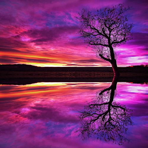 Google Image Result for http://cdnimg.visualizeus.com/thumbs/34/02/sunset,sunsets,reflection,tree,water,colors-340215dfad3a266667874542e6f4dfd3_h.jpg