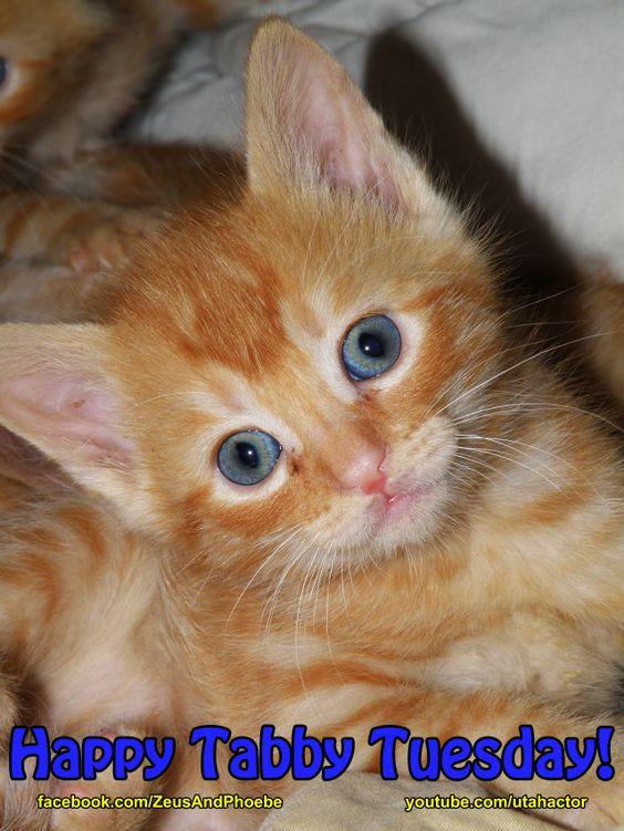 Watch videos of kittens at https://www.youtube.com/playlist?list=PL35306587D74B164B: